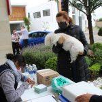 Realizan campaña de vacunación antirrábica en Ocoyucan