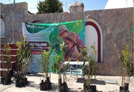 Ayuntamiento de Puebla alista entrega de más de 2 mil árboles frutales en 10 Juntas Auxiliares
